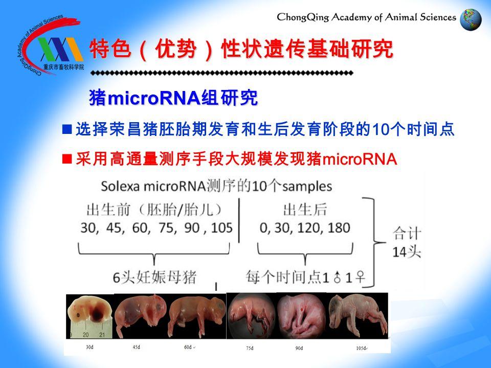 选择荣昌猪胚胎期发育和生后发育阶段的 10 个时间点 采用高通量测序手段大规模发现猪 microRNA 特色(优势)性状遗传基础研究 猪 microRNA 组研究