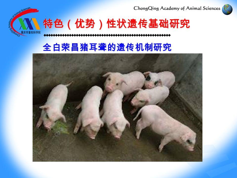 特色(优势)性状遗传基础研究 全白荣昌猪耳聋的遗传机制研究