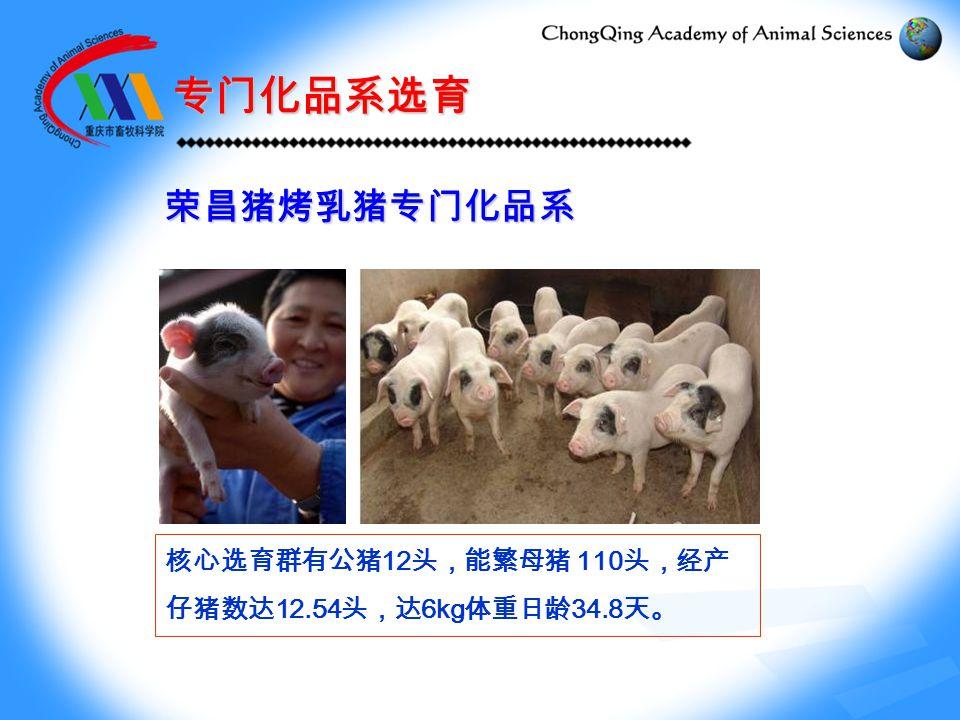 专门化品系选育 荣昌猪烤乳猪专门化品系 核心选育群有公猪 12 头,能繁母猪 110 头,经产 仔猪数达 12.54 头,达 6kg 体重日龄 34.8 天。