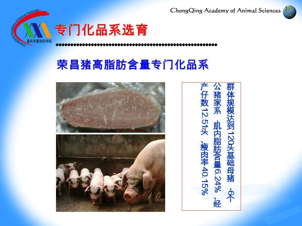 荣昌猪高脂肪含量专门化品系 专门化品系选育