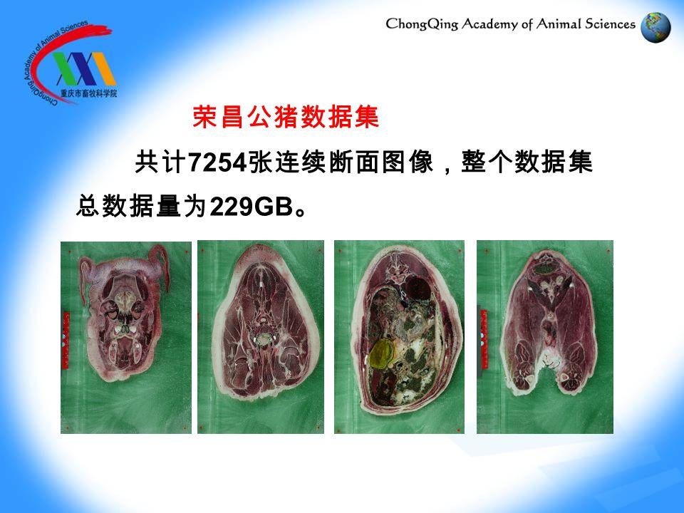 荣昌公猪数据集 共计 7254 张连续断面图像,整个数据集 总数据量为 229GB 。