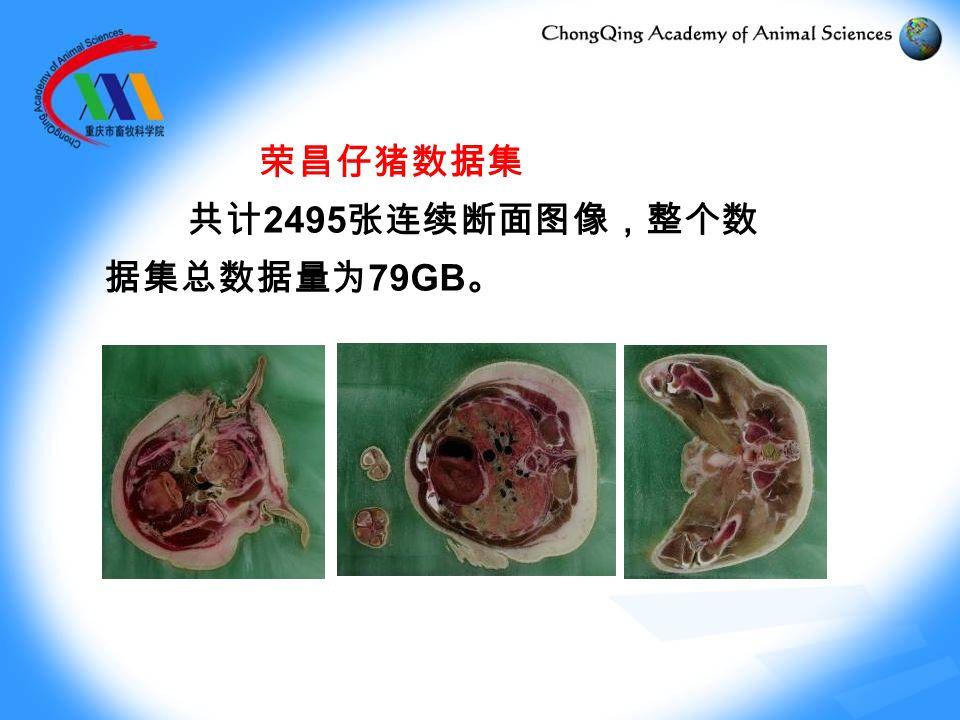 荣昌仔猪数据集 共计 2495 张连续断面图像,整个数 据集总数据量为 79GB 。