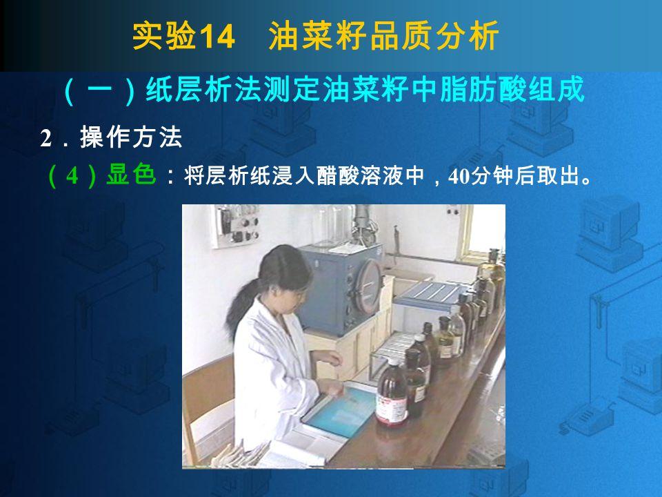 实验 14 油菜籽品质分析 2 .操作方法 ( 4 )显色: 将层析纸浸入醋酸溶液中, 40 分钟后取出。 (一)纸层析法测定油菜籽中脂肪酸组成