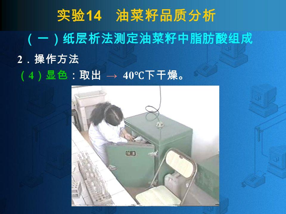 实验 14 油菜籽品质分析 2 .操作方法 ( 4 )显色:取出 → 40 ℃下干燥。 (一)纸层析法测定油菜籽中脂肪酸组成
