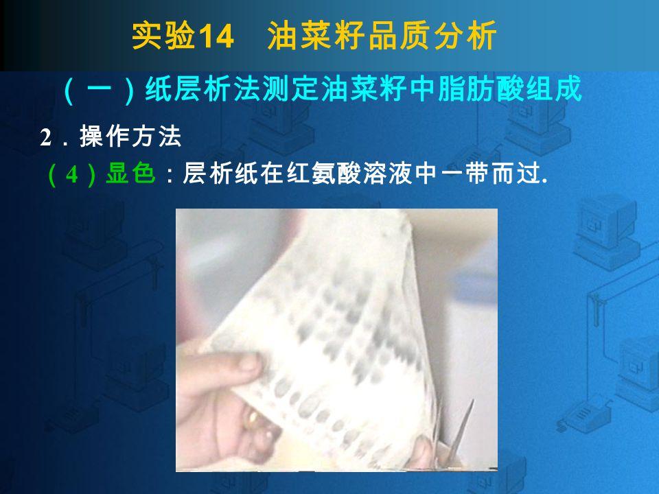 实验 14 油菜籽品质分析 2 .操作方法 ( 4 )显色:层析纸在红氨酸溶液中一带而过. (一)纸层析法测定油菜籽中脂肪酸组成