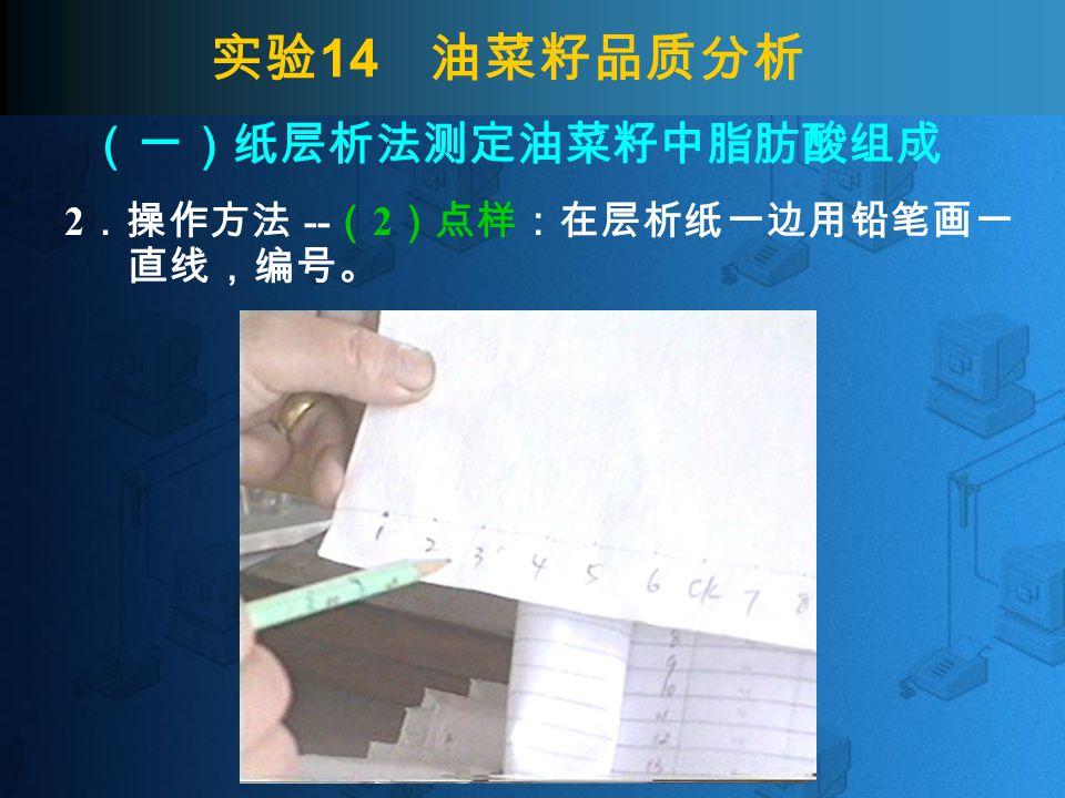 实验 14 油菜籽品质分析 2 .操作方法 -- ( 2 )点样:在层析纸一边用铅笔画一 直线,编号。 (一)纸层析法测定油菜籽中脂肪酸组成