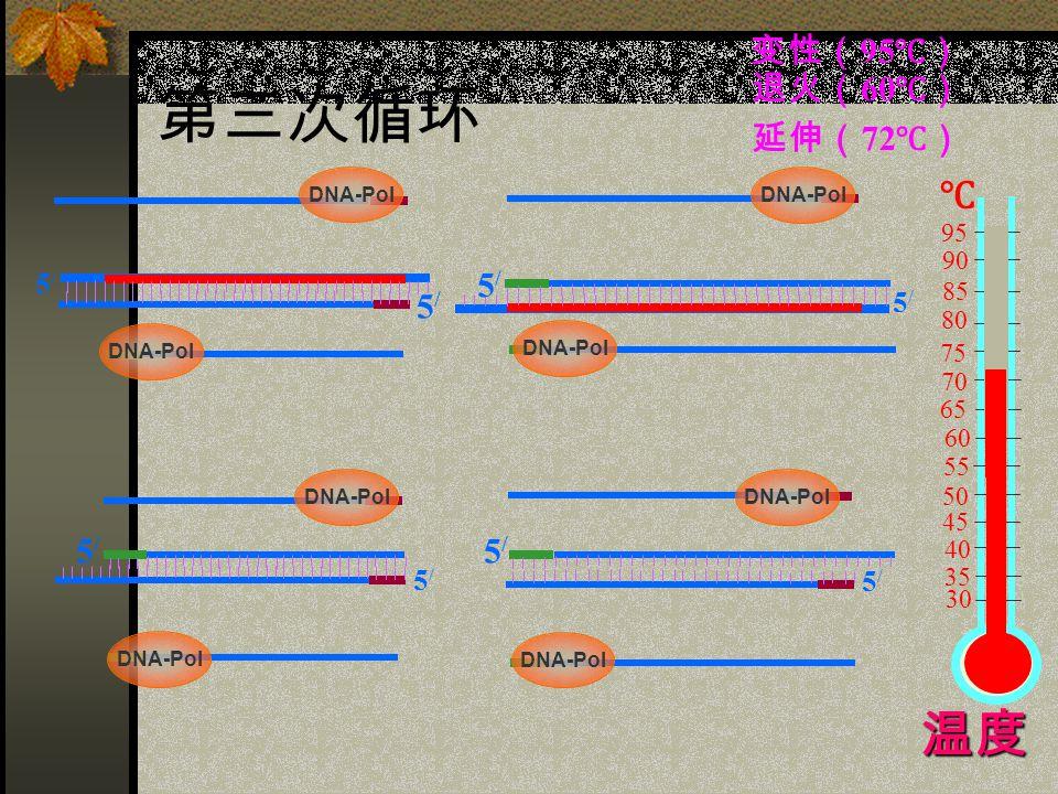 第三次循环 5/5/ 5/5/ 5/5/ 5/5/ 5/5/ 5/5/ 5/5/ 60 75 85 95 90 80 70 65 55 50 45 40 35 30 ℃ 5/5/ 变性( 95 ℃) 退火( 60 ℃) 延伸( 72 ℃) 温度 DNA-Pol