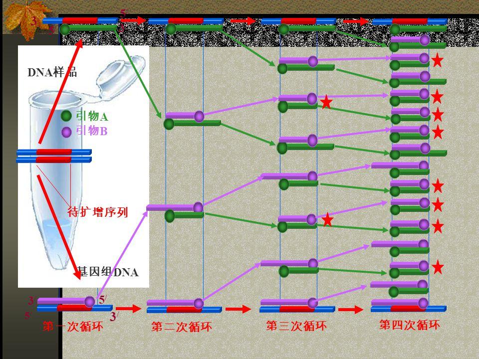 基因组 DNA DNA 样品 第一次循环 第二次循环 第三次循环 第四次循环 待扩增序列 引物 A 引物 B 3/3/ 5/5/ 3/3/ 5/5/ 5/5/ 3/3/ 5/5/ 3/3/