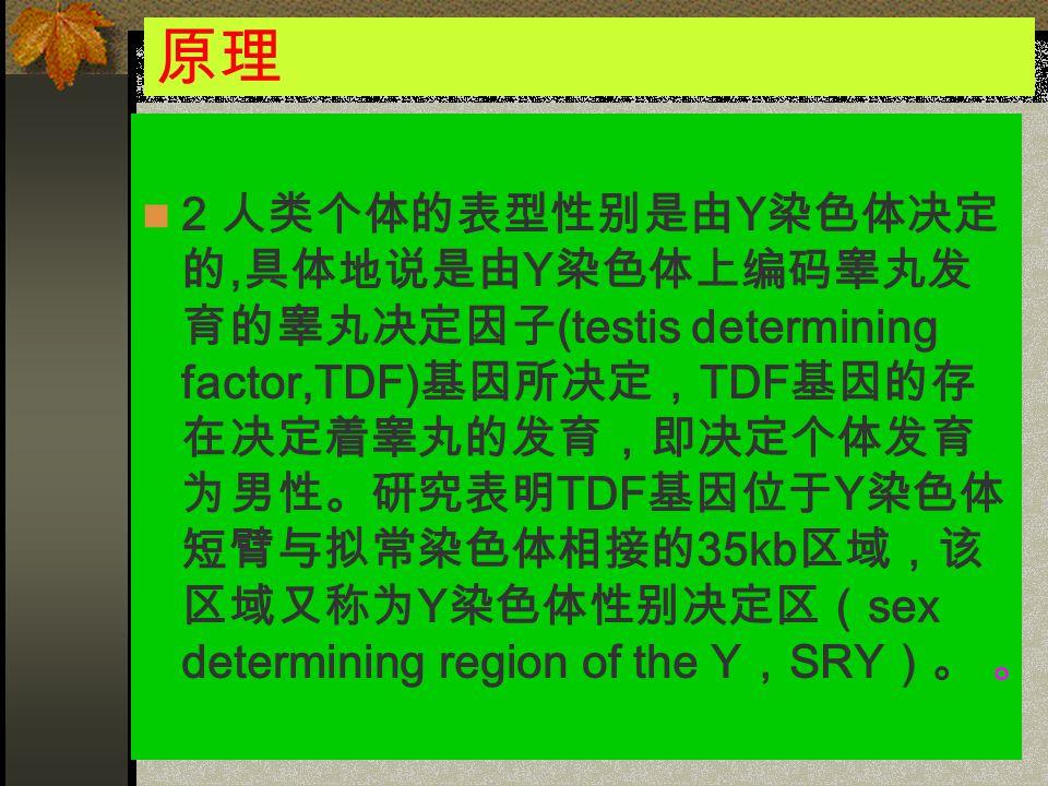 原理 2 人类个体的表型性别是由 Y 染色体决定 的, 具体地说是由 Y 染色体上编码睾丸发 育的睾丸决定因子 (testis determining factor,TDF) 基因所决定, TDF 基因的存 在决定着睾丸的发育,即决定个体发育 为男性。研究表明 TDF 基因位于 Y 染色体 短臂与拟常染色体相接的 35kb 区域,该 区域又称为 Y 染色体性别决定区( sex determining region of the Y , SRY )。 。