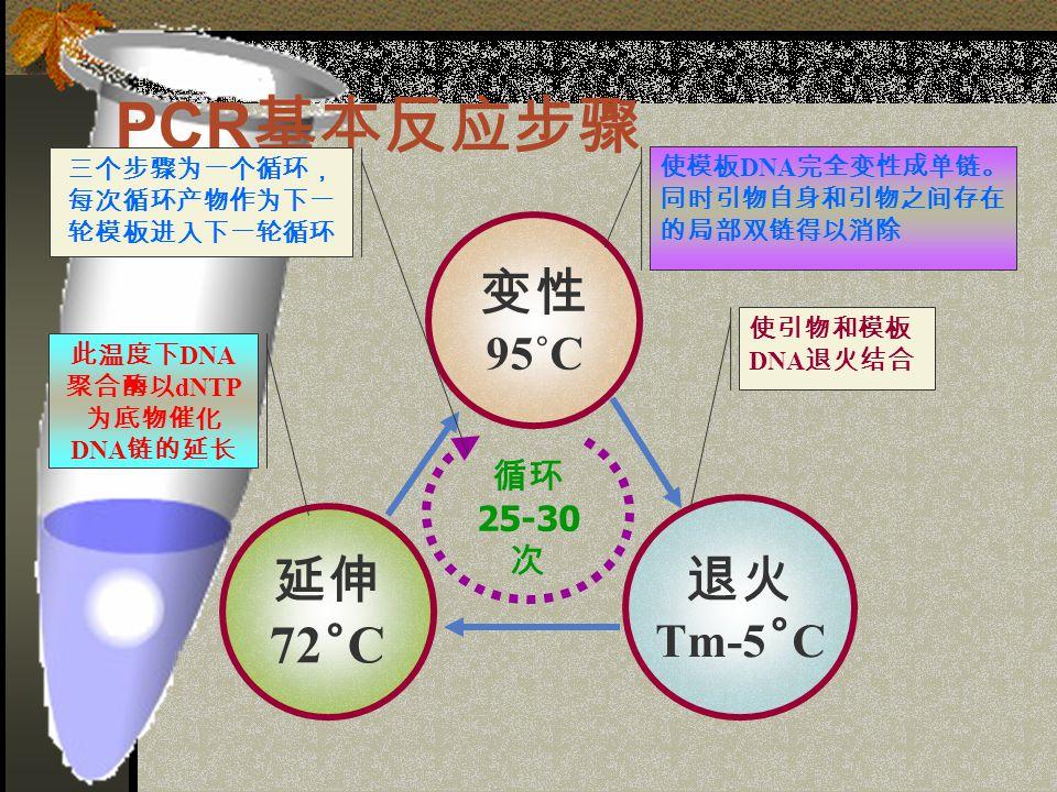 PCR 基本反应步骤 变性 95˚C 延伸 72 ˚ C 退火 Tm-5 ˚ C 循环 25-30 次 使模板 DNA 完全变性成单链。 同时引物自身和引物之间存在 的局部双链得以消除 使引物和模板 DNA 退火结合 此温度下 DNA 聚合酶以 dNTP 为底物催化 DNA 链的延长 三个步骤为一个循环, 每次循环产物作为下一 轮模板进入下一轮循环