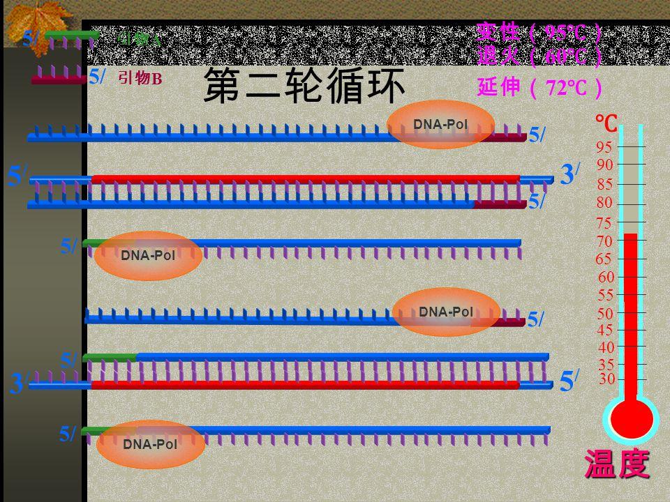 第二轮循环 5/ 5/5/ 3/3/ 3/3/ 5/5/ 引物 A 引物 B 60 75 85 95 90 80 70 65 55 50 45 40 35 30 ℃ 变性( 95 ℃) 退火( 60 ℃) 延伸( 72 ℃) 5/ 温度 DNA-Pol