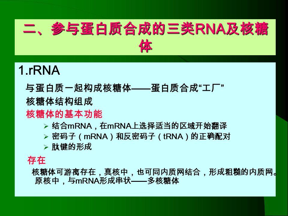 五、真核细胞蛋白质合成的特点 核糖体为 80S ,由 60S 的大亚基和 40S 的小亚基组成 起始密码 AUG 起始 tRNA 为 Met - tRNA 起始复合物结合在 mRNA 5' 端 AUG 上游的帽子结构,真 核 mRNA 无富含嘌呤的 SD 序列(除某些病毒 mRNA 外) 起始复合物 已发现的真核起始因子有近 9 种( eukaryote Initiation factor,eIF ) eIF4A.eIF4E.P220 复合物称为帽子结构结合 蛋白复合物( CBPC ) 肽链终止因子( EF1α EF1βγ )及释放因子( RF ) 线粒体、叶绿体内蛋白质的合成同于原核细胞