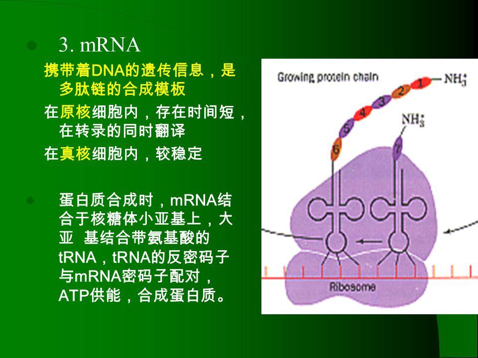 核糖体移动方向 P位点P位点 A位点A位点