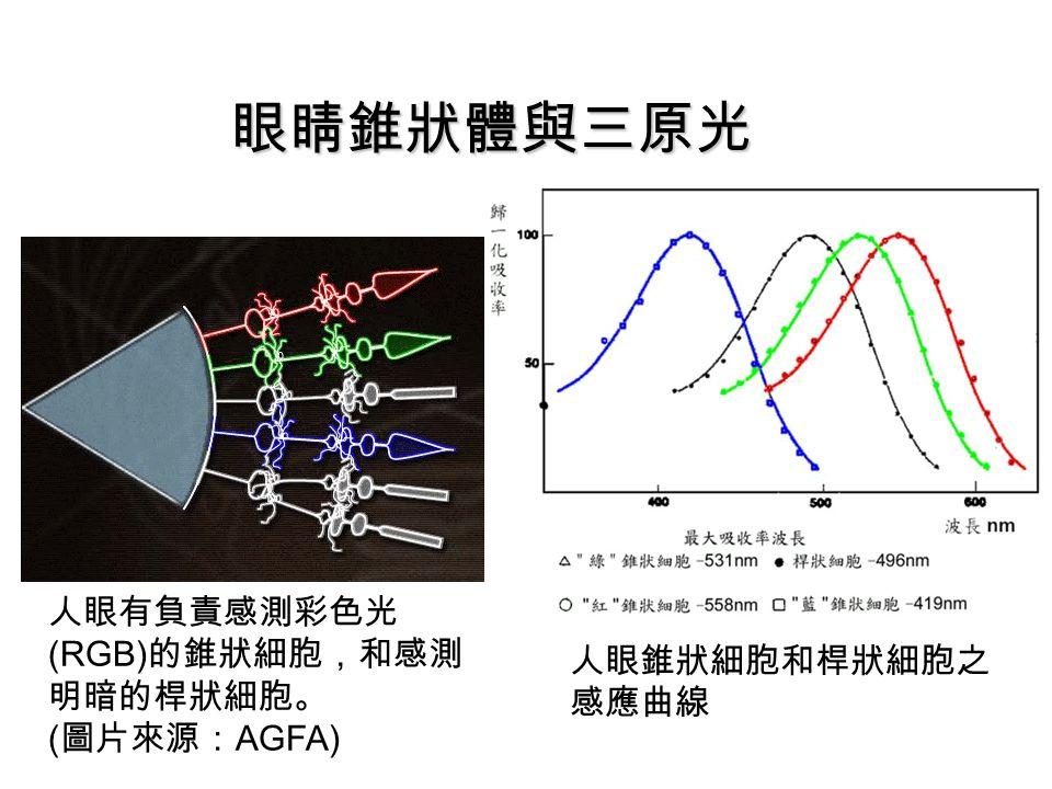 眼睛錐狀體與三原光 人眼有負責感測彩色光 (RGB) 的錐狀細胞,和感測 明暗的桿狀細胞。 ( 圖片來源: AGFA) 人眼錐狀細胞和桿狀細胞之 感應曲線