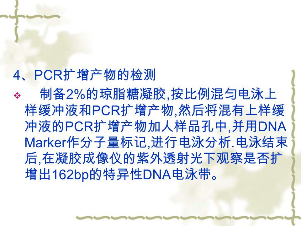 4 、 PCR 扩增产物的检测  制备 2% 的琼脂糖凝胶, 按比例混匀电泳上 样缓冲液和 PCR 扩增产物, 然后将混有上样缓 冲液的 PCR 扩增产物加人样品孔中, 并用 DNA Marker 作分子量标记, 进行电泳分析.