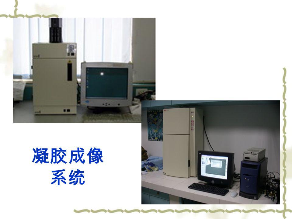 凝胶成像 系统