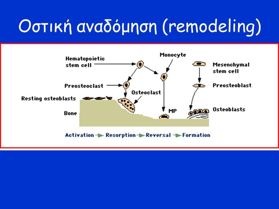Οστική αναδόμηση (remodeling)