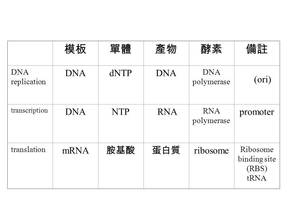 模板單體產物酵素備註 DNA replication DNAdNTPDNA DNA polymerase transcription DNANTP RNA RNA polymerase promoter translation mRNA 胺基酸蛋白質 ribosome Ribosome bindin