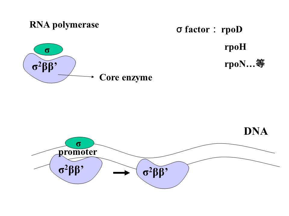 檢測流程 ( 續 ) (A) LCM (Laser Capture Microdissection)