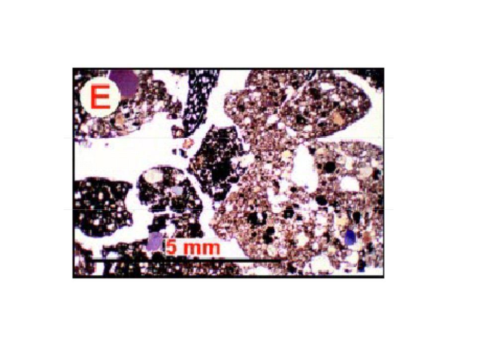 Οργανικός ορίζοντας Ο ορίζοντας με καλή γονιμότητα και φυσικές ιδιότητες Ανόργανος ορίζοντας με μικρή έκπλυση θρεπτικών, οργ.