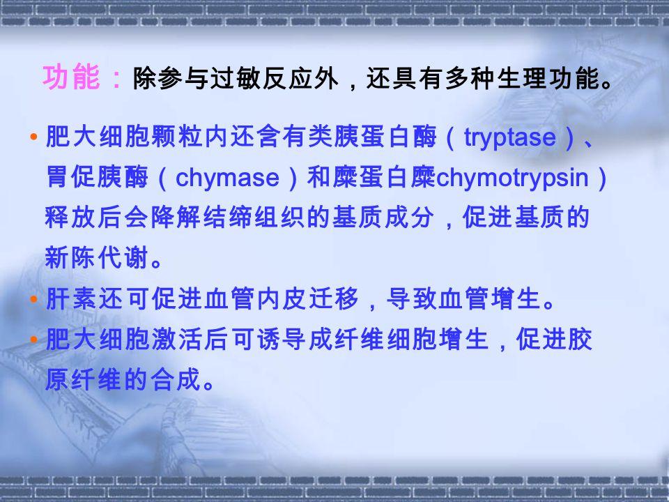 肥大细胞颗粒内还含有类胰蛋白酶( tryptase )、 胃促胰酶( chymase )和糜蛋白糜 chymotrypsin ) 释放后会降解结缔组织的基质成分,促进基质的 新陈代谢。 肝素还可促进血管内皮迁移,导致血管增生。 肥大细胞激活后可诱导成纤维细胞增生,促进胶 原纤维的合成。 功能: 除参与过敏反应外,还具有多种生理功能。