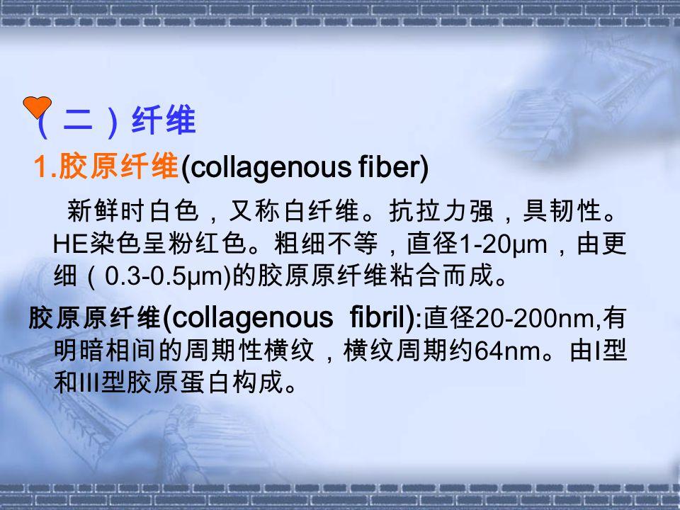 (二)纤维 1. 胶原纤维 (collagenous fiber) 新鲜时白色,又称白纤维。抗拉力强,具韧性。 HE 染色呈粉红色。粗细不等,直径 1-20μm ,由更 细( 0.3-0.5μm) 的胶原原纤维粘合而成。 胶原原纤维 (collagenous fibril) : 直径 20-200n