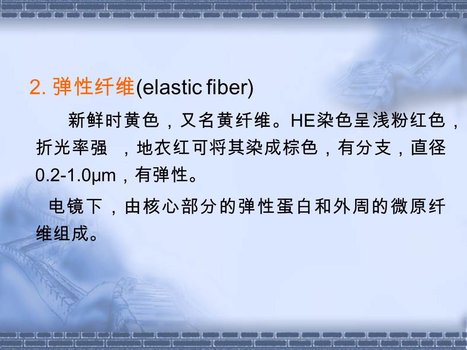 2. 弹性纤维 (elastic fiber) 新鲜时黄色,又名黄纤维。 HE 染色呈浅粉红色, 折光率强 ,地衣红可将其染成棕色,有分支,直径 0.2-1.0μm ,有弹性。 电镜下,由核心部分的弹性蛋白和外周的微原纤 维组成。