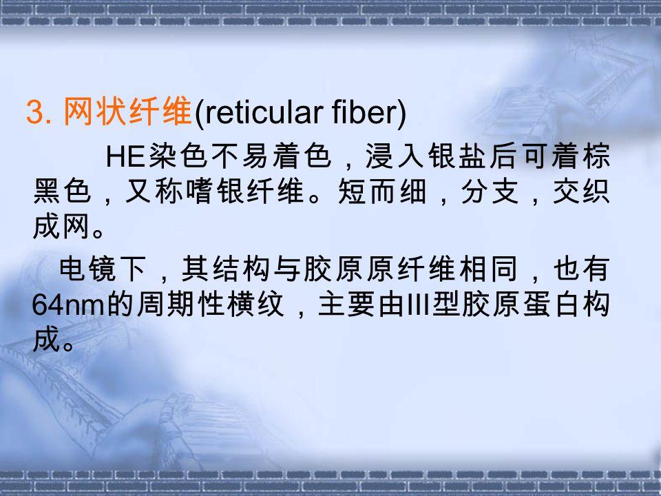 3. 网状纤维 (reticular fiber) HE 染色不易着色,浸入银盐后可着棕 黑色,又称嗜银纤维。短而细,分支,交织 成网。 电镜下,其结构与胶原原纤维相同,也有 64nm 的周期性横纹,主要由Ⅲ型胶原蛋白构 成。