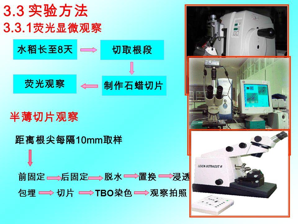 3.3 实验方法 3.3.1 荧光显微观察 水稻长至 8 天 制作石蜡切片 切取根段 荧光观察 前固定 后固定 脱水 置换 浸透 包埋 切片 TBO 染色 观察拍照 半薄切片观察 距离根尖每隔 10mm 取样