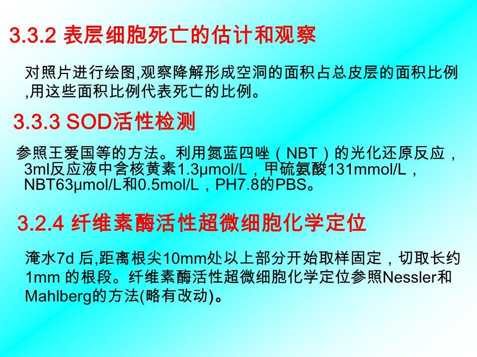 3.3.3 SOD 活性检测 参照王爱国等的方法。利用氮蓝四唑( NBT )的光化还原反应, 3ml 反应液中含核黄素 1.3μmol/L ,甲硫氨酸 131mmol/L , NBT63μmol/L 和 0.5mol/L , PH7.8 的 PBS 。 3.3.2 表层细胞死亡的估计和观察 对照片进行绘图, 观察降解形成空洞的面积占总皮层的面积比例, 用这些面积比例代表死亡的比例。 3.2.4 纤维素酶活性超微细胞化学定位 淹水 7d 后, 距离根尖 10mm 处以上部分开始取样固定,切取长约 1mm 的根段。纤维素酶活性超微细胞化学定位参照 Nessler 和 Mahlberg 的方法 ( 略有改动 ) 。