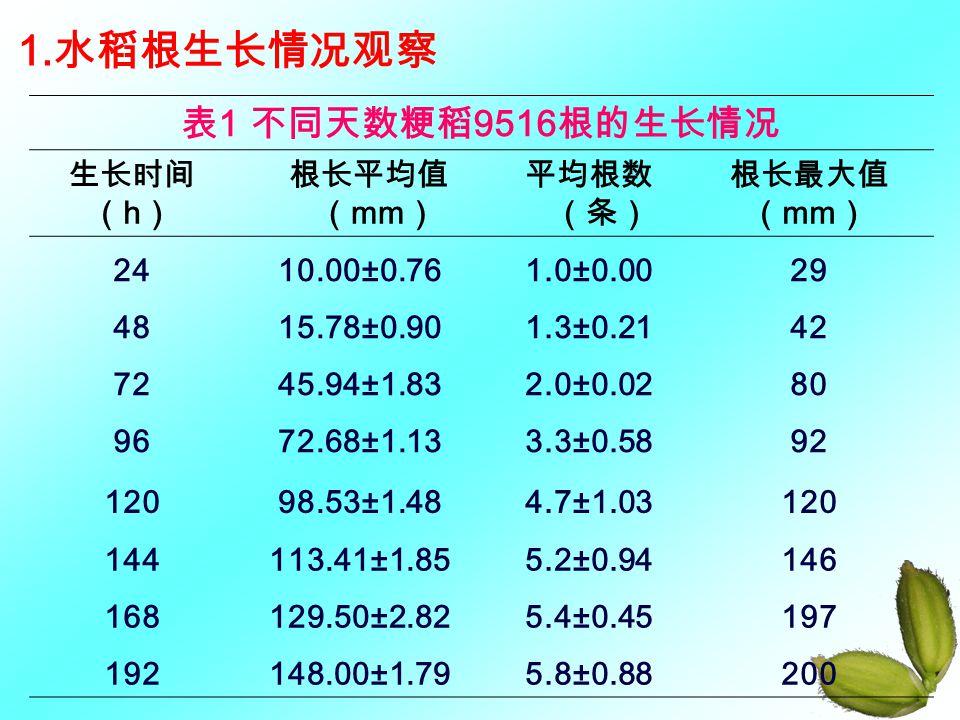 1. 水稻根生长情况观察 表 1 不同天数粳稻 9516 根的生长情况 生长时间 ( h ) 根长平均值 ( mm ) 平均根数 (条) 根长最大值 ( mm ) 2410.00±0.76 1.0±0.0029 4815.78±0.90 1.3±0.2142 7245.94±1.83 2.0±0.0