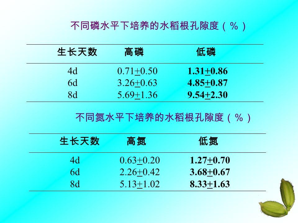4d 0.71+0.50 1.31+0.86 6d 3.26+0.63 4.85+0.87 8d 5.69+1.36 9.54+2.30 生长天数 高磷 低磷 4d 0.63+0.20 1.27+0.70 6d 2.26+0.42 3.68+0.67 8d 5.13+1.02 8.33+1.63 生长天数 高氮 低氮 不同磷水平下培养的水稻根孔隙度(%) 不同氮水平下培养的水稻根孔隙度(%)