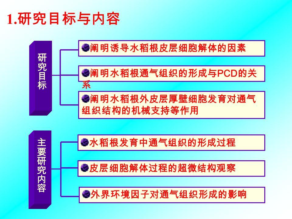 2.1 通气组织形成过程的研究方案 2.