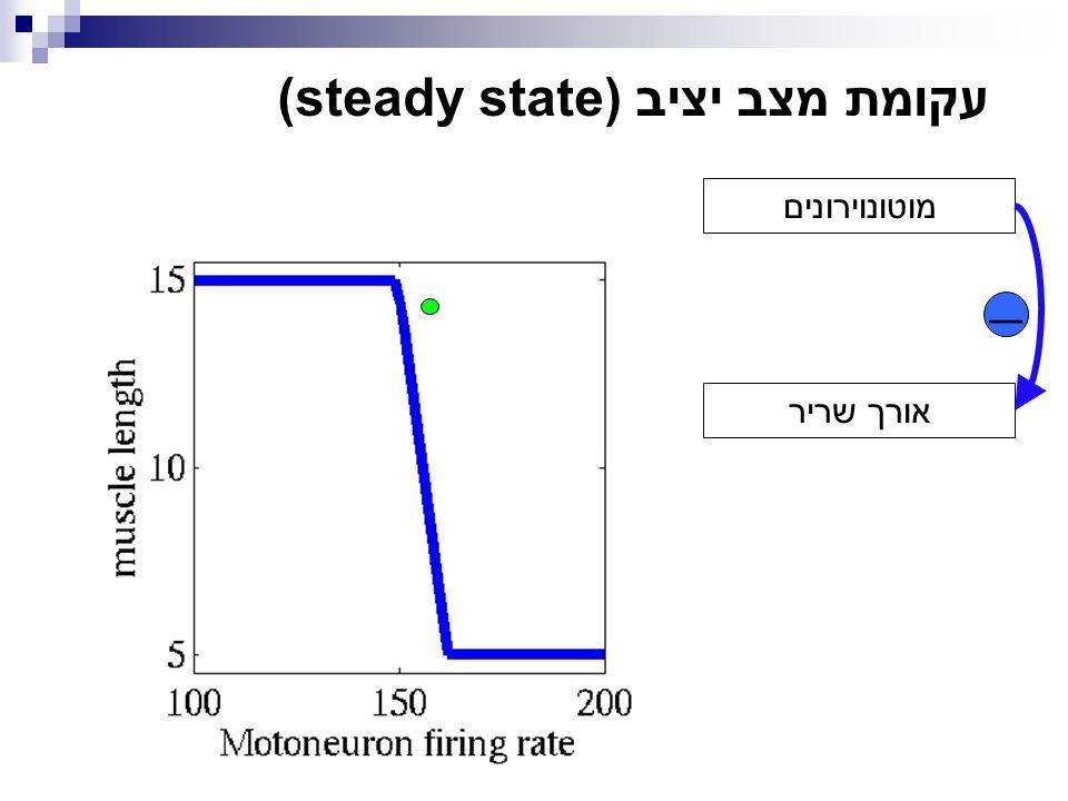  מוטונוירונים אורך שריר עקומת מצב יציב (steady state)