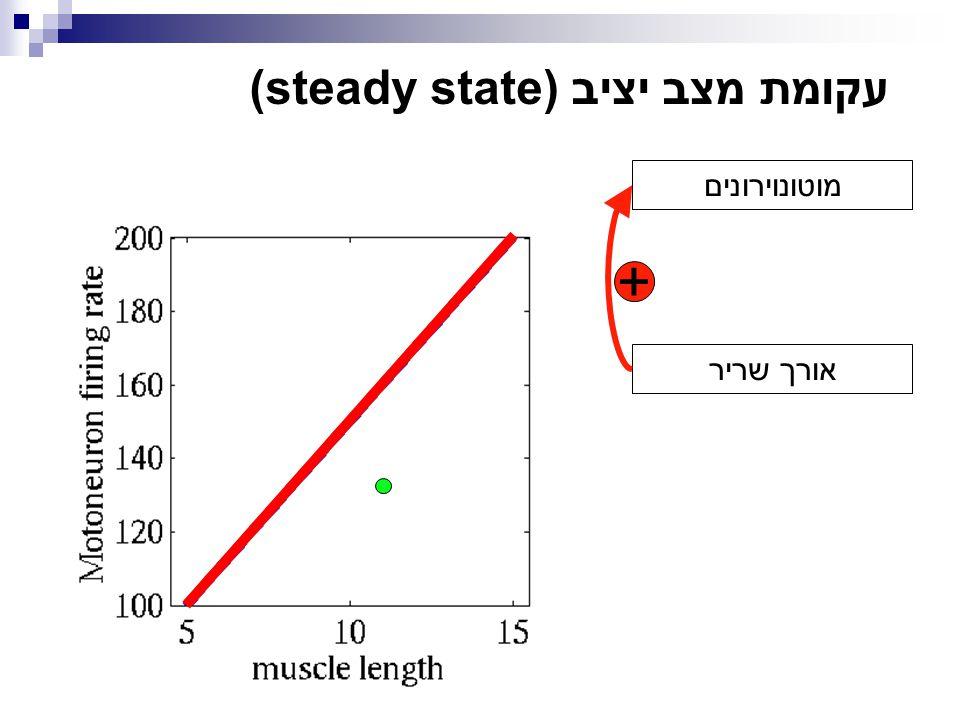 + מוטונוירונים אורך שריר עקומת מצב יציב (steady state)