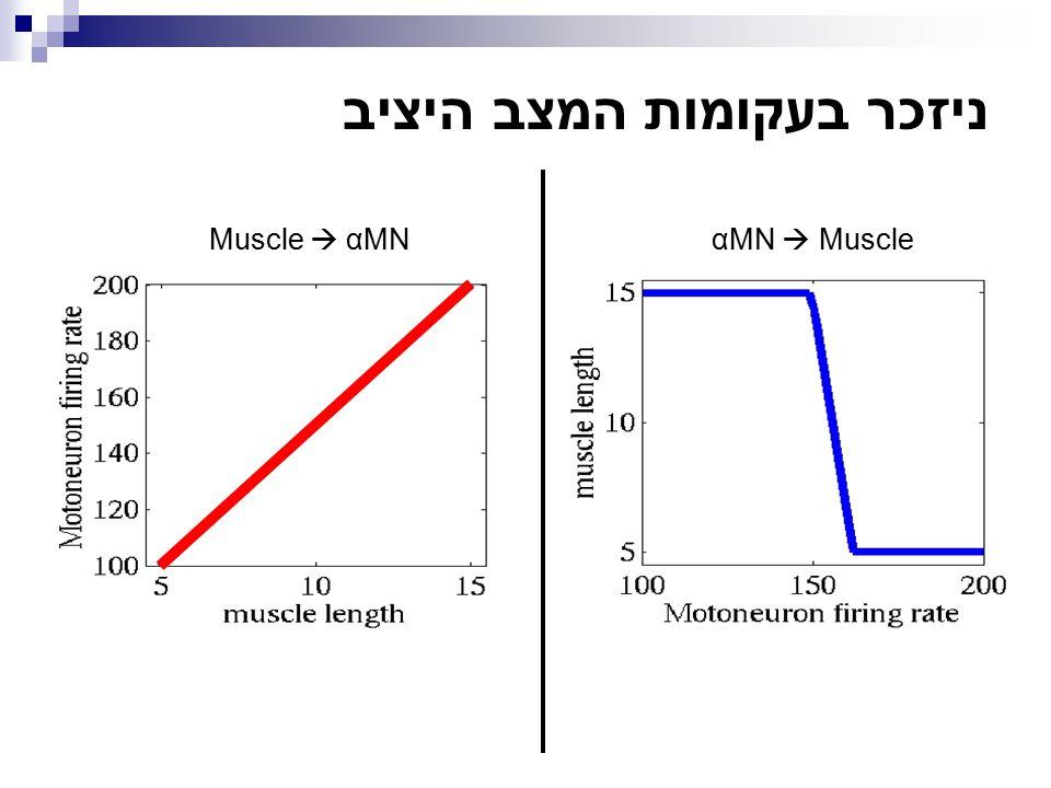 ניזכר בעקומות המצב היציב αMN  Muscle Muscle  αMN
