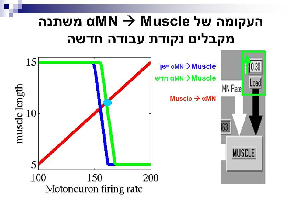 העקומה של αMN  Muscle משתנה מקבלים נקודת עבודה חדשה αMN  Muscle ישן α MN  Muscle חדש Muscle  αMN
