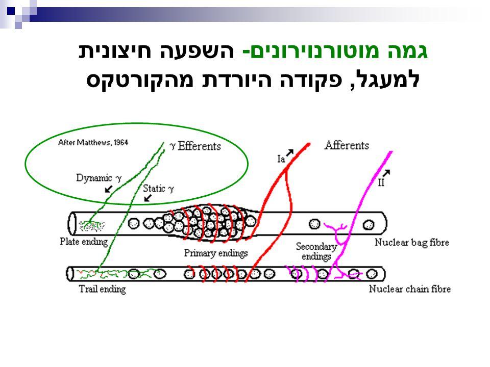 גמה מוטורנוירונים- השפעה חיצונית למעגל, פקודה היורדת מהקורטקס