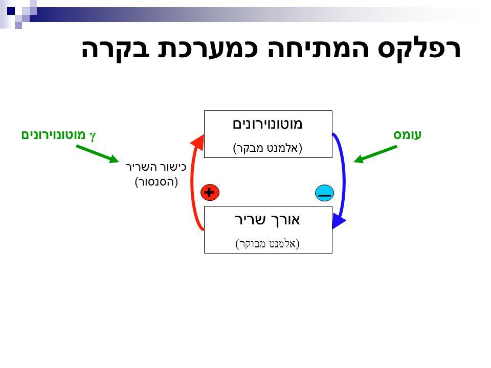 נקודת העבודה מלבישים את שני הגרפים זה על זה (שימו לב לצירים!). αMN  Muscle Muscle  αMN