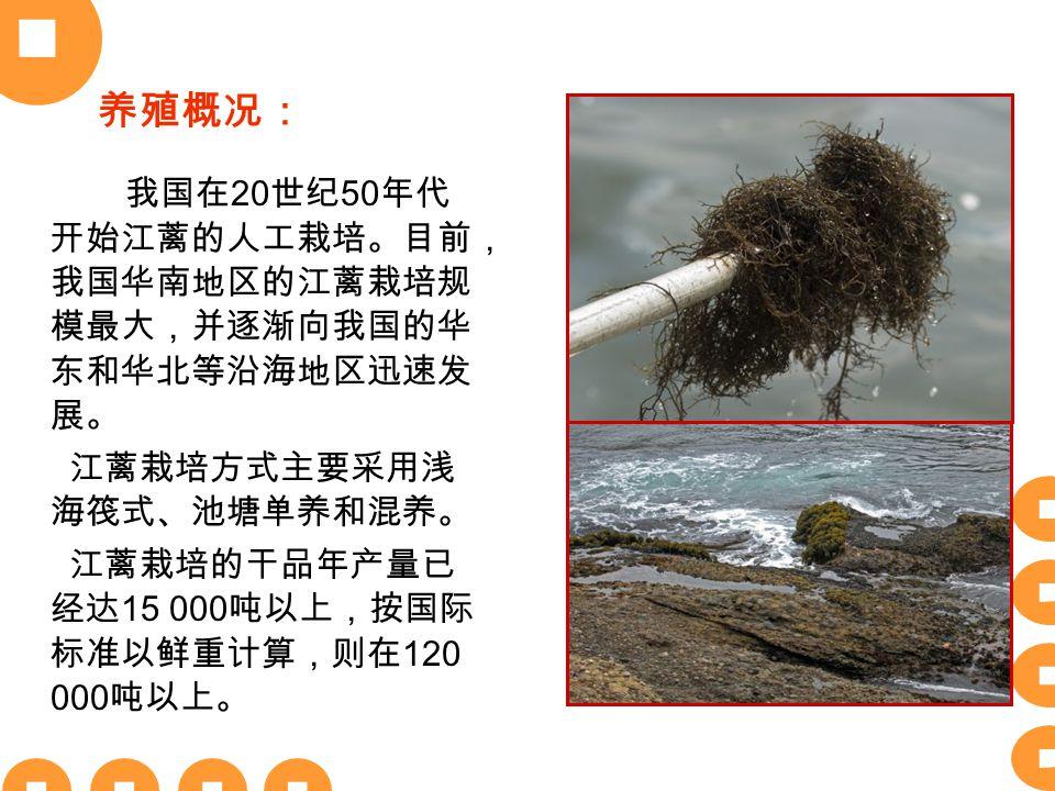 我国在 20 世纪 50 年代 开始江蓠的人工栽培。目前, 我国华南地区的江蓠栽培规 模最大,并逐渐向我国的华 东和华北等沿海地区迅速发 展。 江蓠栽培方式主要采用浅 海筏式、池塘单养和混养。 江蓠栽培的干品年产量已 经达 15 000 吨以上,按国际 标准以鲜重计算,则在 120 000 吨以上。