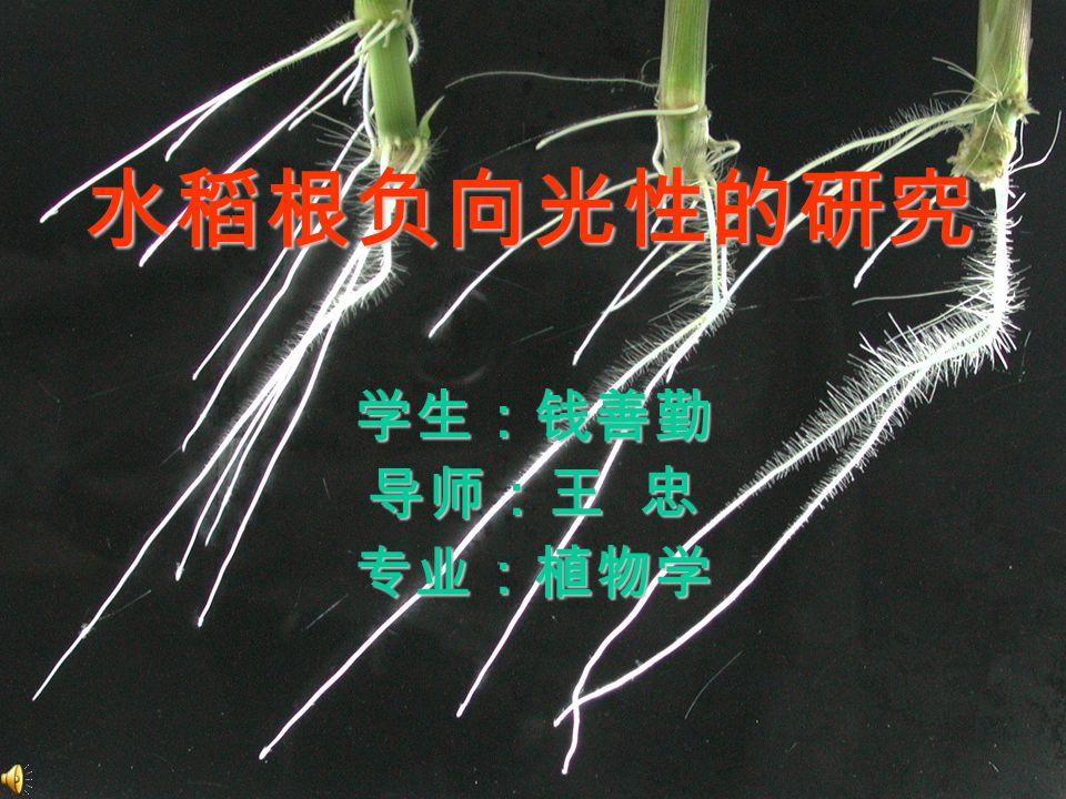光是对植物调控作用最广泛、最明显的环境因 子。光作为环境信号,对植物的器官发生、形态建 成、向性运动等方面都有深刻的影响。 光质 → 光受体 → 信号转导组分 → 光调节基因 → 光形态建成反应 植物光受体 1) 向光素 2) 隐花色素 3) 光敏色素