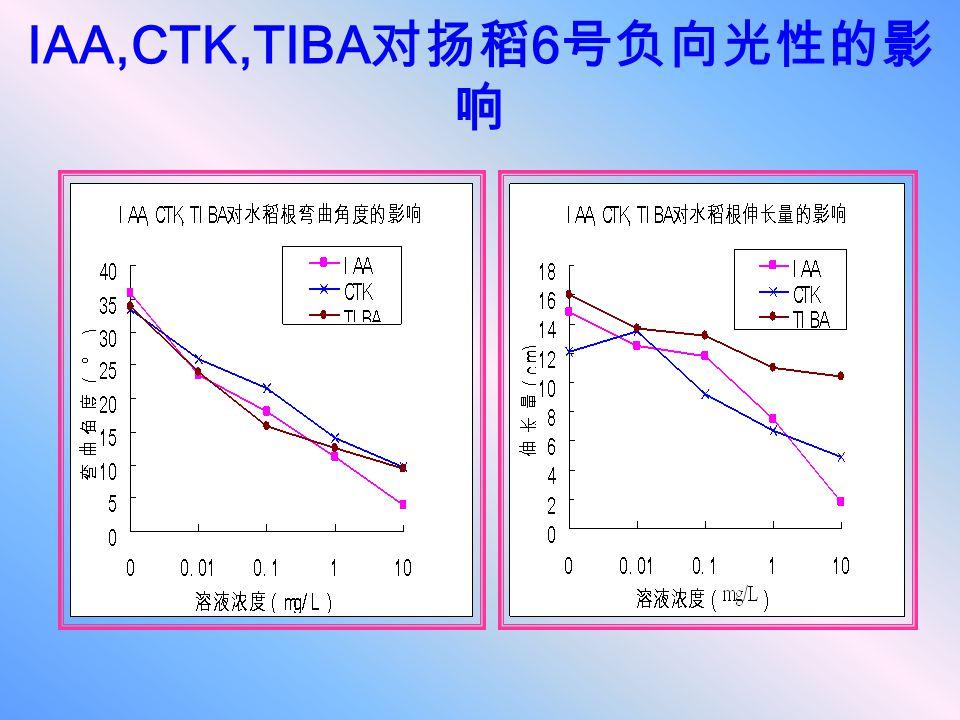 IAA,CTK,TIBA 对扬稻 6 号负向光性的影 响