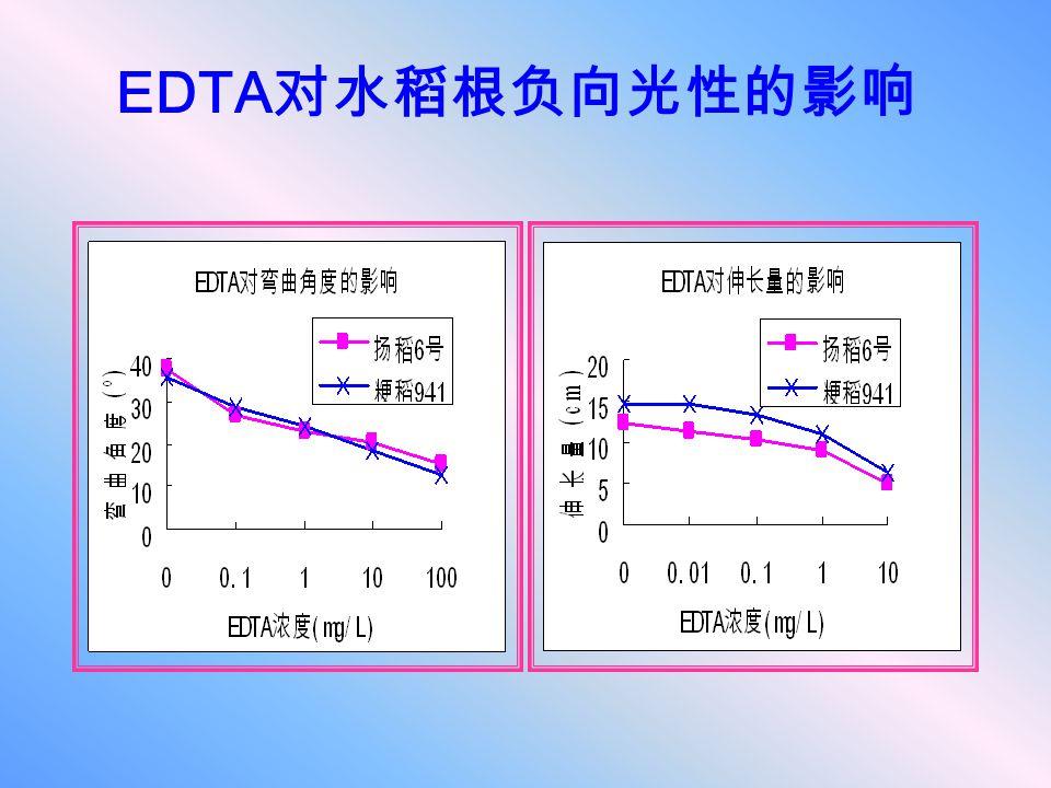 EDTA 对水稻根负向光性的影响