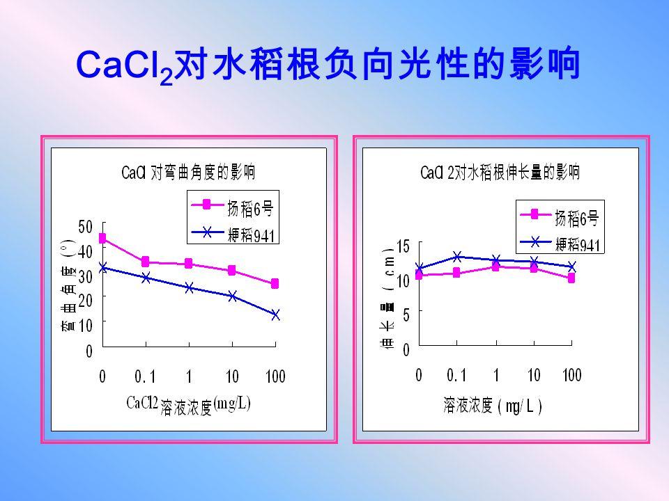 CaCl 2 对水稻根负向光性的影响