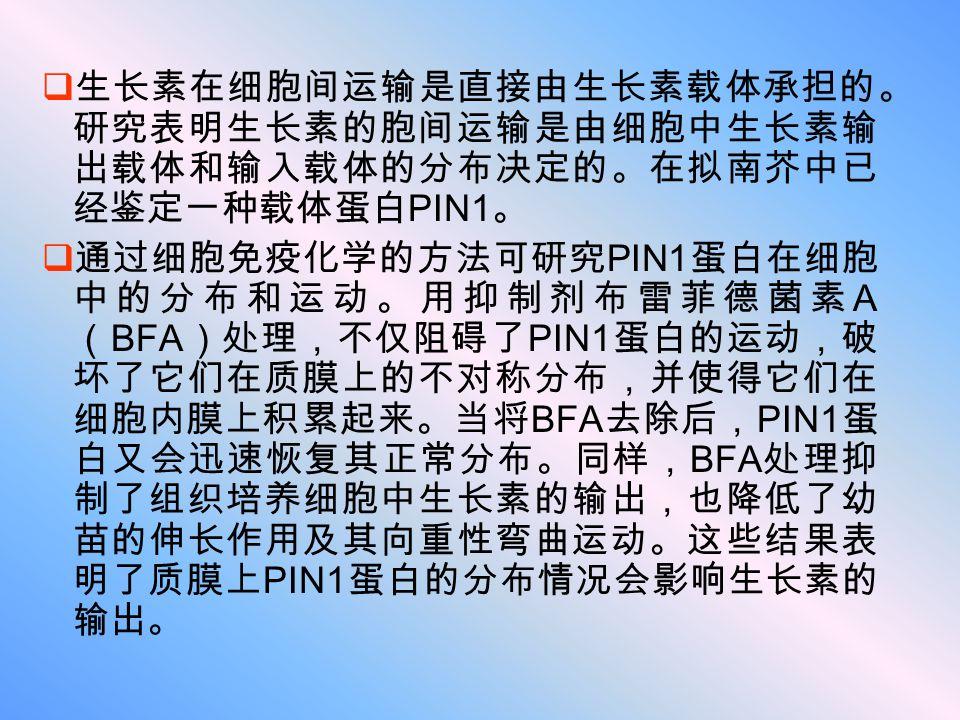 生长素在细胞间运输是直接由生长素载体承担的。 研究表明生长素的胞间运输是由细胞中生长素输 出载体和输入载体的分布决定的。在拟南芥中已 经鉴定一种载体蛋白 PIN1 。  通过细胞免疫化学的方法可研究 PIN1 蛋白在细胞 中的分布和运动。用抑制剂布雷菲德菌素 A ( BFA )处理,不仅阻碍了