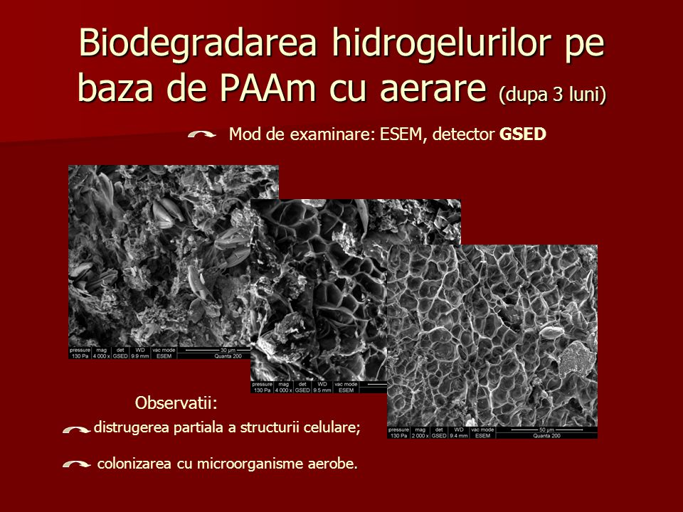Biodegradarea hidrogelurilor pe baza de PAAm cu aerare (dupa 3 luni) Mod de examinare: ESEM, detector GSED Observatii: distrugerea partiala a structur