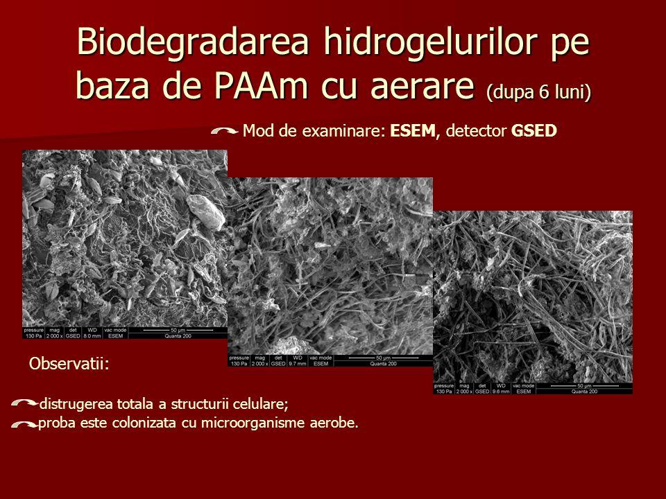 Biodegradarea hidrogelurilor pe baza de PAAm cu aerare (dupa 6 luni) Mod de examinare: ESEM, detector GSED Observatii: distrugerea totala a structurii