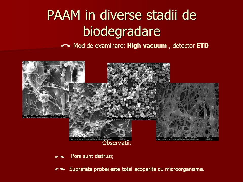 PAAM in diverse stadii de biodegradare Mod de examinare: High vacuum, detector ETD Observatii: Porii sunt distrusi; Suprafata probei este total acoper