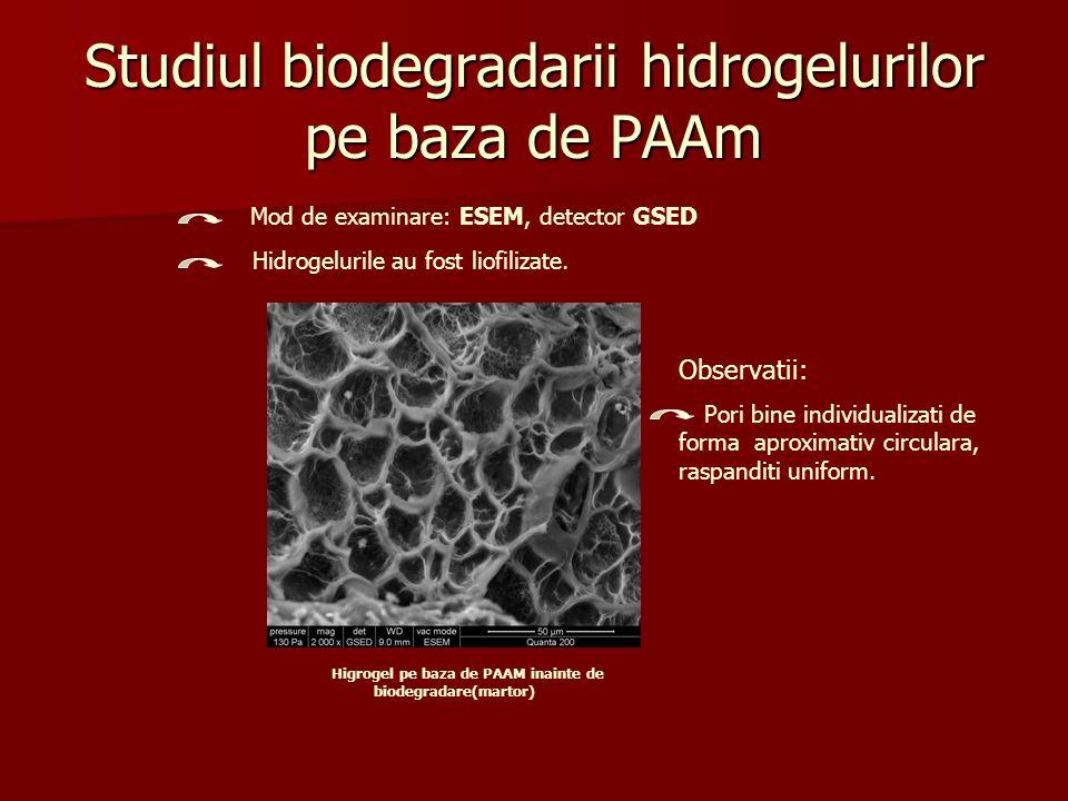 Biodegradarea hidrogelurilor pe baza de PAAm fara aerare Mod de examinare: ESEM, detector GSED Observatii: distrugerea structurii celulare; colonizarea cu microorganisme anaerobe.
