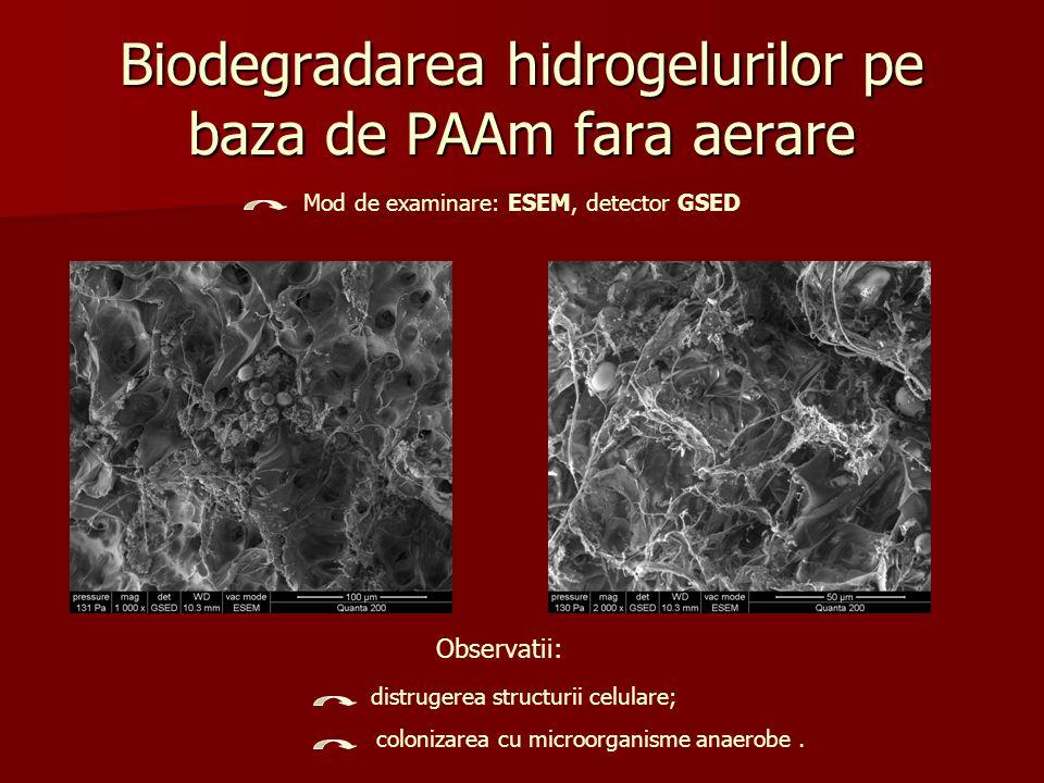Biodegradarea hidrogelurilor pe baza de PAAm cu aerare (dupa 3 luni) Mod de examinare: ESEM, detector GSED Observatii: distrugerea partiala a structurii celulare;.